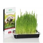 Травка для кошек  (овес для проращивания)