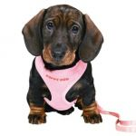 Шлейка-жилетка с поводком для щенка 23-34см/2м/10мм. нейлон, розовый (15567)