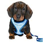 Шлейка-жилетка с поводком для щенка 23-34см/2м/10мм. нейлон, синий (15568)