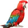 Для крупных птиц